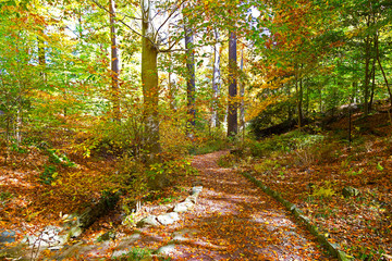 Walkway in a park with colorful fallen leave in autumn.