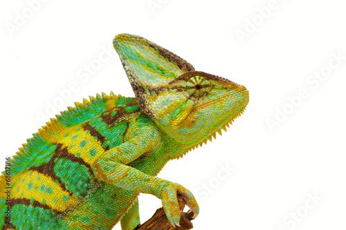 Keuken foto achterwand Kameleon chameleon