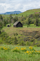 RuraL barn with yellow wildflowers