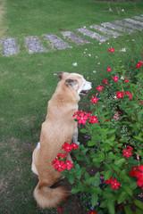 庭でくつろぐ犬の後姿