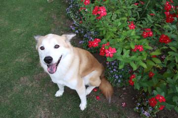 夏の庭に笑顔で座っている犬