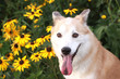 笑顔で見つめる犬と黄色い花
