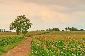 Crops and trees