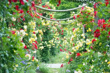 バラのアーチ バラ園 小径