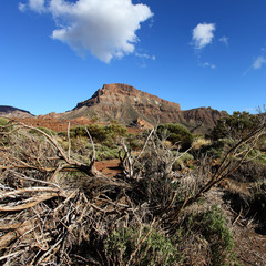 Canary Islands Tenerife landscape of dried tree, mountains and s
