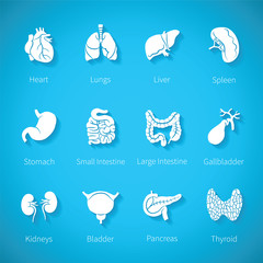 Vector icon set of human internal organs
