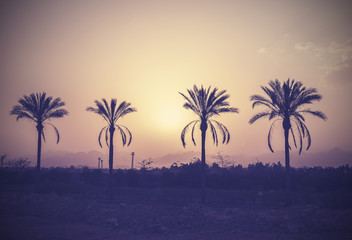 Vintage stylized palm trees silhouettes at sunset.