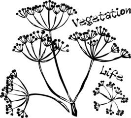 Vegetation life