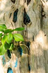 Baumstamm mit Blaetter im Sonnenlicht