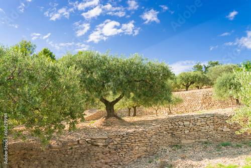 Aluminium Olijfboom Olives taste like Sun