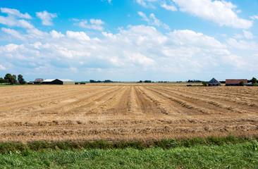 farm field in holland