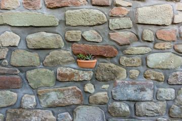 vaso con pianta