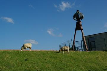 Schafe und Seezeichen in Husum