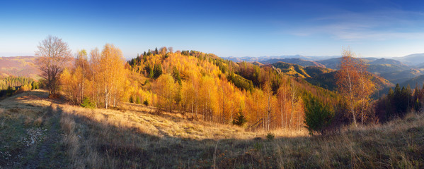 Autumn panorama mountain forest