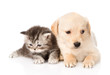 golden retriever puppy dog and british tabby cat lying together.