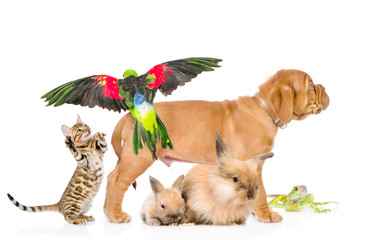 group of exotic pets. isolated on white background