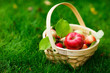 canvas print picture - Organic apples in a basket