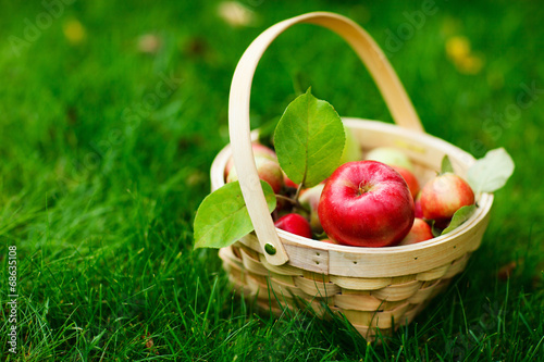 canvas print picture Organic apples in a basket