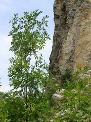the tree and the rock