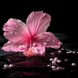 Beautiful spa setting of delicate pink hibiscus, zen stones with