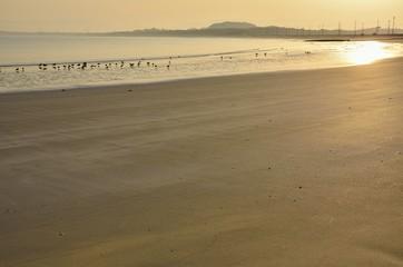 静かな朝の砂浜
