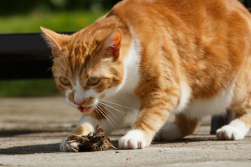 Katze frißt Beute