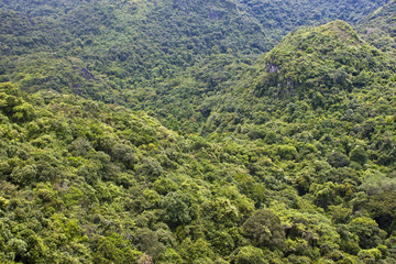 Jungle in Cat Ba National Park in Vietnam
