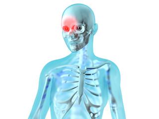 Weibliche Anatomie - Kopfschmerzen
