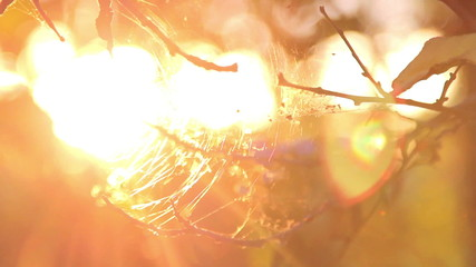 The light of the setting sun shining through the web.