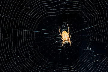 spider in its web closeup