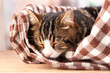 cat on plaid in room