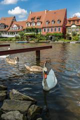 Bamberg Klein Venedig (Schwanenjunge)