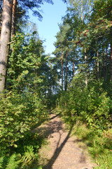 The path in the summer forest