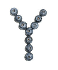 Alphabet letter Y arranged from highbush blueberry isolated