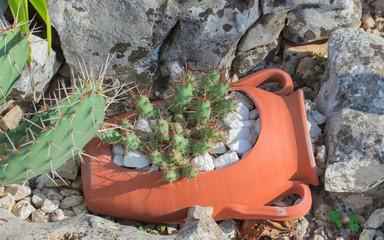 cactus in pot broken