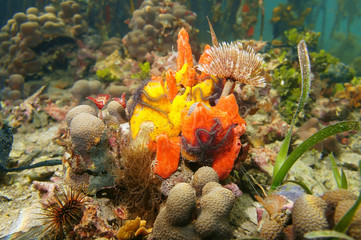Colorful marine life below the mangrove underwater