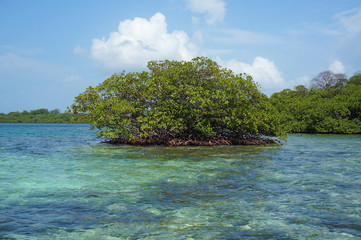 Islet of mangrove tree in the Caribbean sea