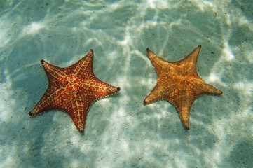 Two starfish underwater with sunlight on the sand