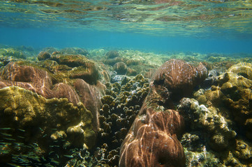 Underwater coral reef close to water surface