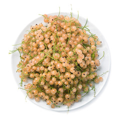 Top view of plate with white currant isolated on white backgroun