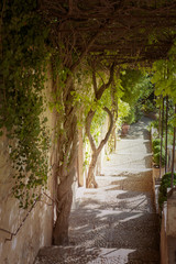 Alhambra Palace garden