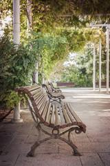Bench park under tree