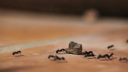 Ants running