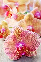 Beautiful Orchids flowers on a wooden table