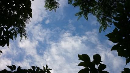 Cielo enmarcado por ramas