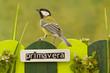 Obrazy na płótnie, fototapety, zdjęcia, fotoobrazy drukowane : Bird perched on a fence decorated with the word spring on spanis