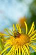 Obrazy na płótnie, fototapety, zdjęcia, fotoobrazy drukowane : Bee on a flower