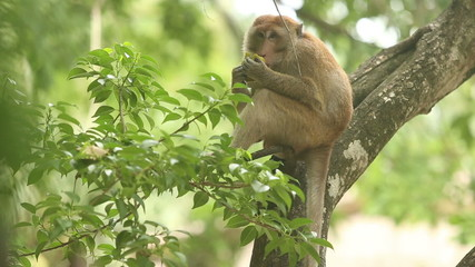 monkey sitting on a branch