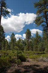 Bryce Forest