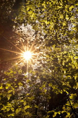 Sunlight shining through a forest canopy